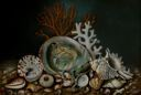 Image of Aquarium Shells