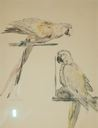 Image of Bird Study